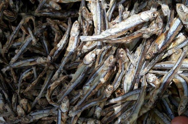 صادرات سه هزار و ۲۰۰ تن ماهی خشک از جزیره قشم