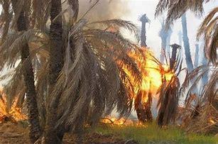 خسارت یک میلیارد تومانی آتش سوزی در بخش توکهور