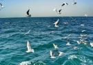 شرایط جهت تردد دریایی مساعد است