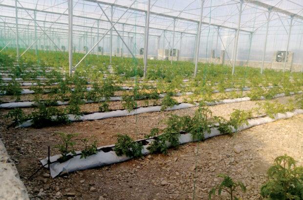 بانکها، بلای جان تولیدکنندگان محصولات کشاورزی هرمزگان