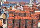 گشوده شدن دروازههای صادرات برای نجـات گـوجهکاران هرمزگان