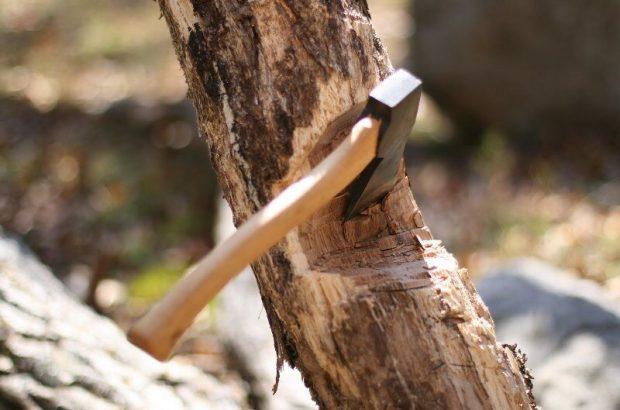 قطع درخت بدون اجازه شهرداری جرم است