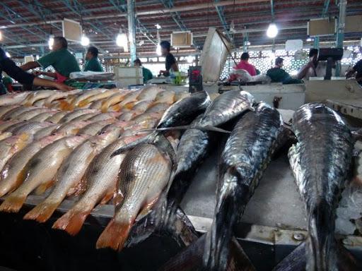 شهروندان بندرعباس از دست فروشان ماهی خرید نکنند
