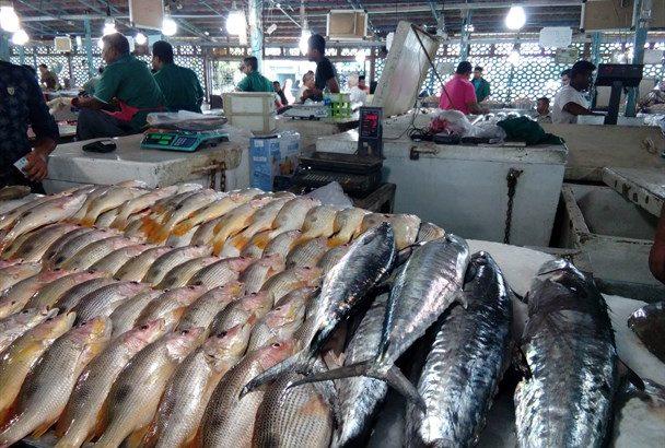 بازار «ماهیفروشان» از امروز بازگشایی میشود